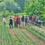 Setmana solidària de recollida d'aliments